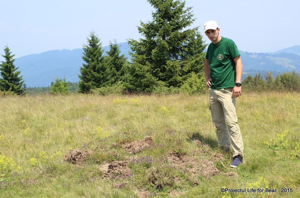 Identifying ants mounds