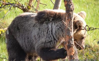 Bear Team – Vrancea County Rescue Intervention