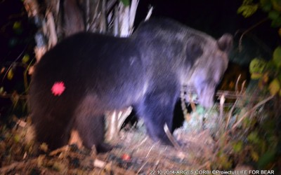 Bear Team-  Argeș County Rescue Intervention