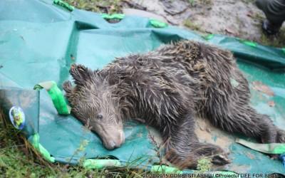 Bear Team- Rescue Intervention